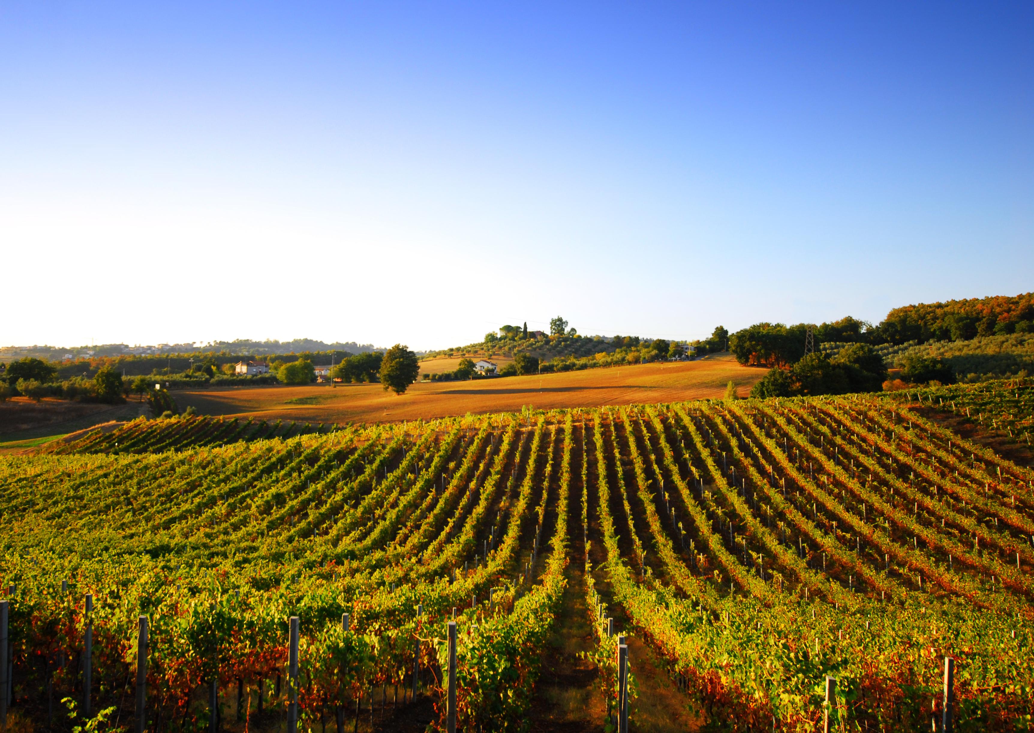 Les vins de Provence, des vins du soleil