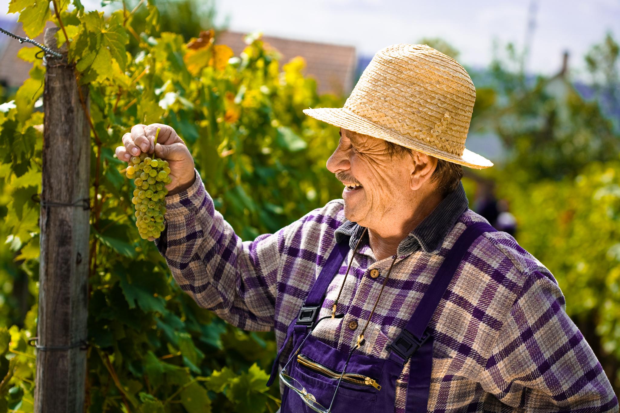 Les métiers indispensables du monde viticole